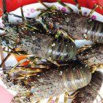 Ghé làng chài ở Quảng Ngãi ăn tôm hùm chấm muối ớt