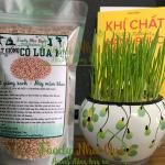 Review hạt giống cỏ lúa mì hữu cơ của FoodyNhaQue.Com