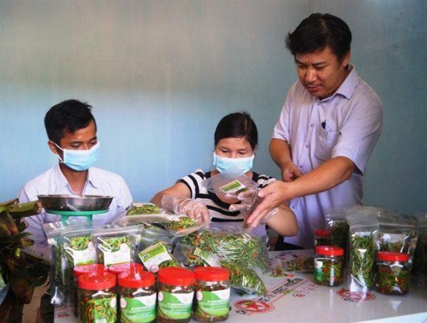 Xây dựng nhãn hiệu Ớt Xiêm Sơn Hà Quảng Ngãi